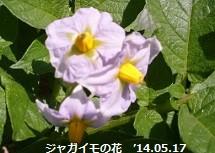 f:id:mikawakinta63:20140516232924j:image:right
