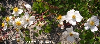 f:id:mikawakinta63:20140522215705j:image