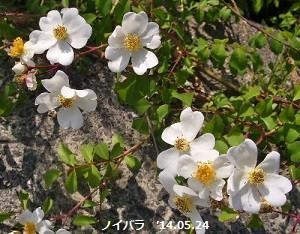 f:id:mikawakinta63:20140522215718j:image:left