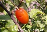 f:id:mikawakinta63:20140522234957j:image:right