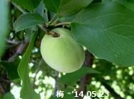 f:id:mikawakinta63:20140522235311j:image:left