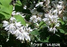 f:id:mikawakinta63:20140528002706j:image:left