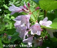 f:id:mikawakinta63:20140528002809j:image:left