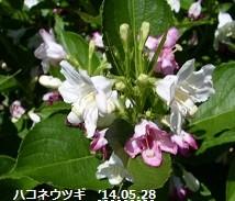f:id:mikawakinta63:20140528002931j:image:right