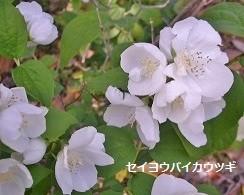 f:id:mikawakinta63:20140528010816j:image:right
