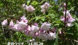 f:id:mikawakinta63:20140528011350j:image:left