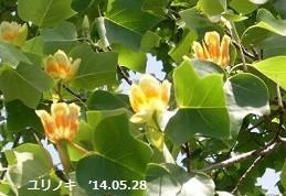 f:id:mikawakinta63:20140528012103j:image:right