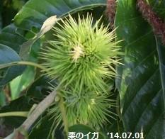 f:id:mikawakinta63:20140629190548j:image:right