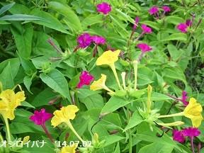 f:id:mikawakinta63:20140701185538j:image:right