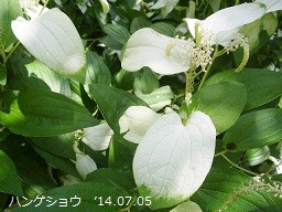 f:id:mikawakinta63:20140705002034j:image:left