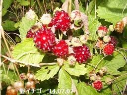 f:id:mikawakinta63:20140707073703j:image:left