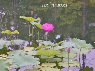 f:id:mikawakinta63:20140708192315j:image:right