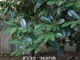 f:id:mikawakinta63:20140709045545j:image:left