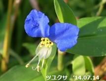f:id:mikawakinta63:20140711191912j:image:left
