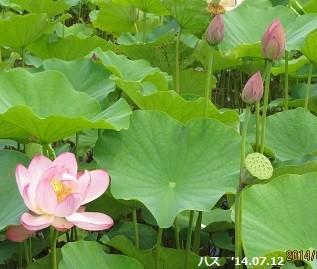 f:id:mikawakinta63:20140712105058j:image:left