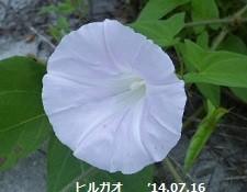f:id:mikawakinta63:20140712192120j:image:right