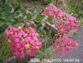 f:id:mikawakinta63:20140712192440j:image:right