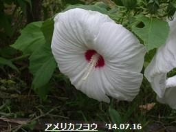 f:id:mikawakinta63:20140712193915j:image:left