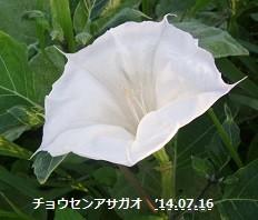 f:id:mikawakinta63:20140715191344j:image:right