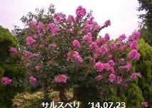 f:id:mikawakinta63:20140718191227j:image:right