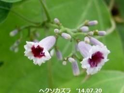 f:id:mikawakinta63:20140718193028j:image:right