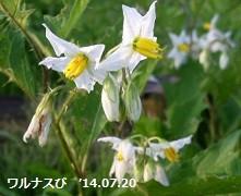 f:id:mikawakinta63:20140719194045j:image:left
