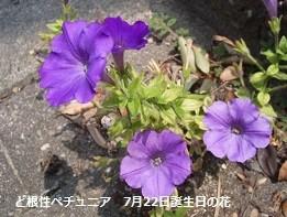 f:id:mikawakinta63:20140722021103j:image:right