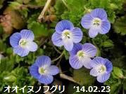 f:id:mikawakinta63:20140724153508p:image