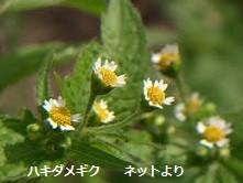 f:id:mikawakinta63:20140724153828j:image