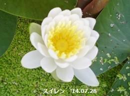 f:id:mikawakinta63:20140725192256j:image:right