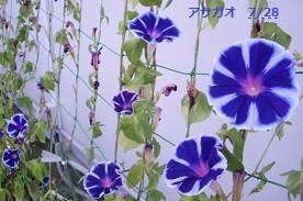 f:id:mikawakinta63:20140727192221j:image:left