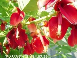 f:id:mikawakinta63:20140728053345j:image:left