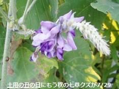 f:id:mikawakinta63:20140728190743j:image:left