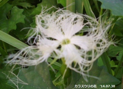 f:id:mikawakinta63:20140729185656j:image