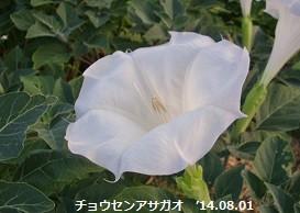 f:id:mikawakinta63:20140730190207j:image:right