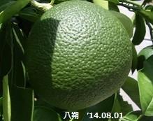 f:id:mikawakinta63:20140801010959j:image:right