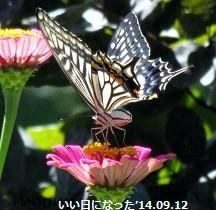 f:id:mikawakinta63:20140912120942j:image:right