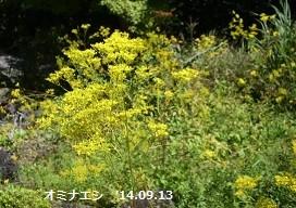 f:id:mikawakinta63:20140913002422j:image:right
