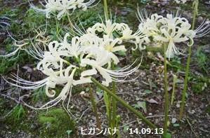 f:id:mikawakinta63:20140913012119j:image:left