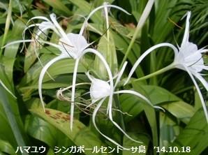 f:id:mikawakinta63:20141019051044j:image:right