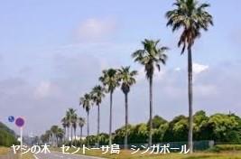f:id:mikawakinta63:20141105174109j:image:right