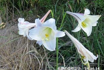 f:id:mikawakinta63:20141114084344j:image:right