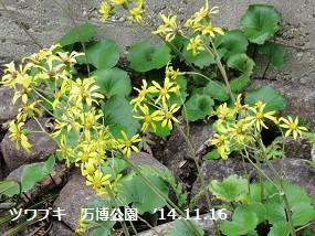 f:id:mikawakinta63:20141116094940j:image:right