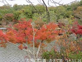 f:id:mikawakinta63:20141116095741j:image:right