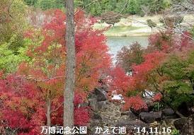 f:id:mikawakinta63:20141116100005j:image:left