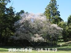 f:id:mikawakinta63:20141119103238j:image:left