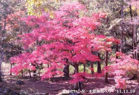 f:id:mikawakinta63:20141119110538j:image