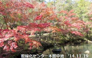 f:id:mikawakinta63:20141119115049j:image:right