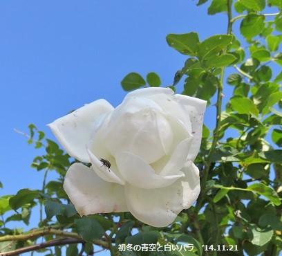 f:id:mikawakinta63:20141121115013j:image