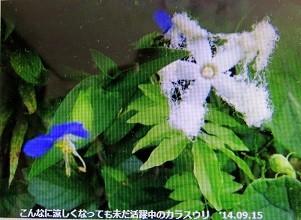 f:id:mikawakinta63:20141122141712j:image:left